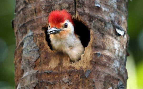 Are Woodpeckers Destroying Your House 3 Generations